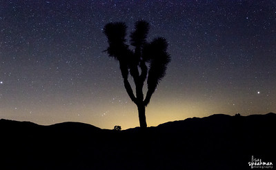 Day 80 - Into The Night Made  another trip to Joshua Tree last weekend specifically to take star photos. I'm still working on processing some of the photos, but this is one of my favorites so far.